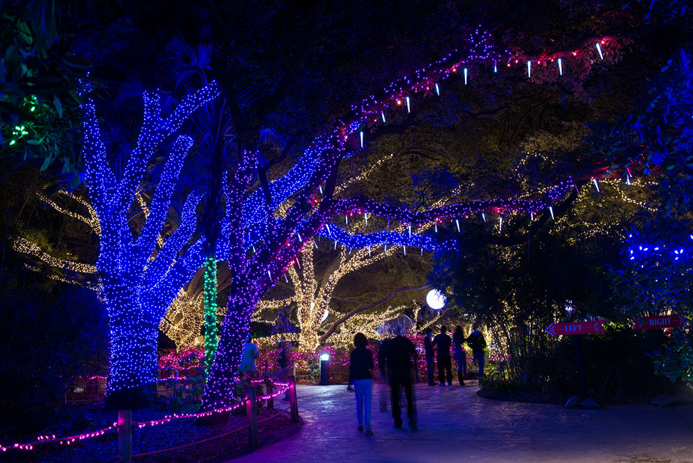 Houston Zoo Txu Energy Presents Zoo Lights Zoo Lights